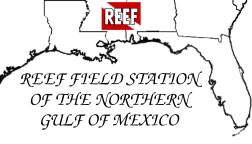 REEF Field Station of the Northern Gulf of Mexico